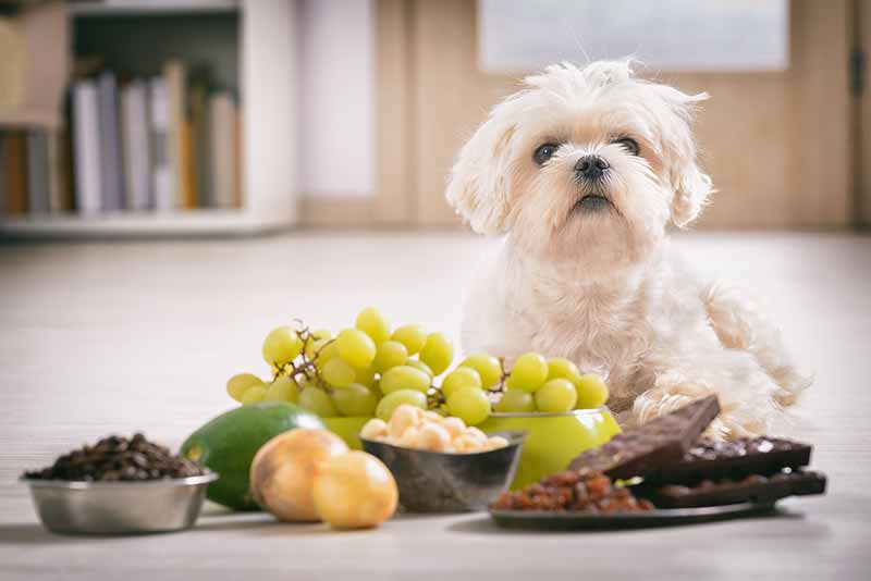Preventing a pet poisoning may prevent a pet emergency