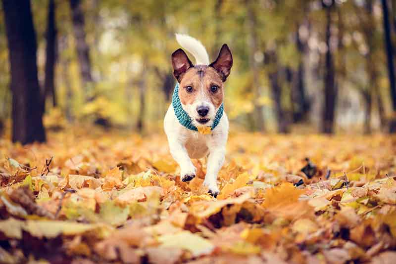 Fall pet safety can keep outdoor fun with pets pet-safe and enjoyable