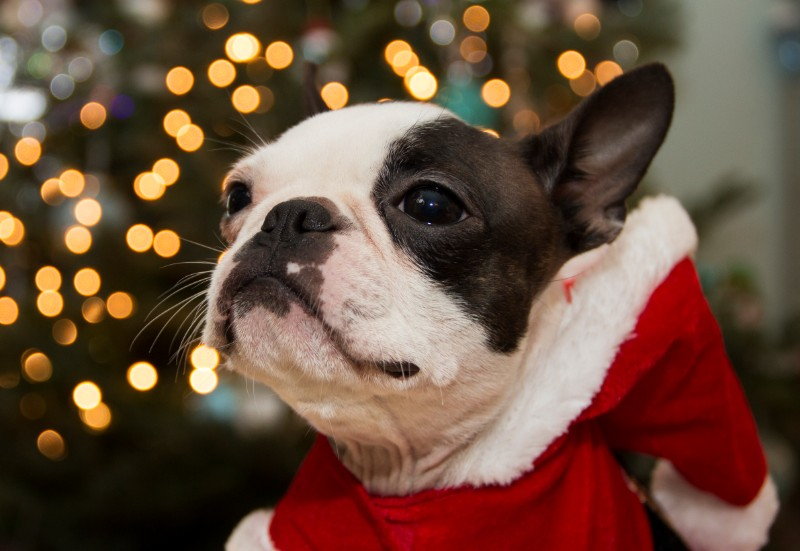 Winter and holiday pet safety can happen!