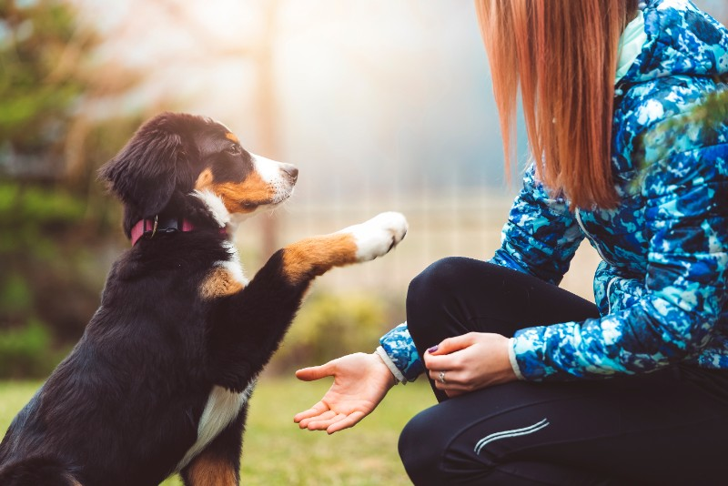 Dog training is important to pet safety and happiness.