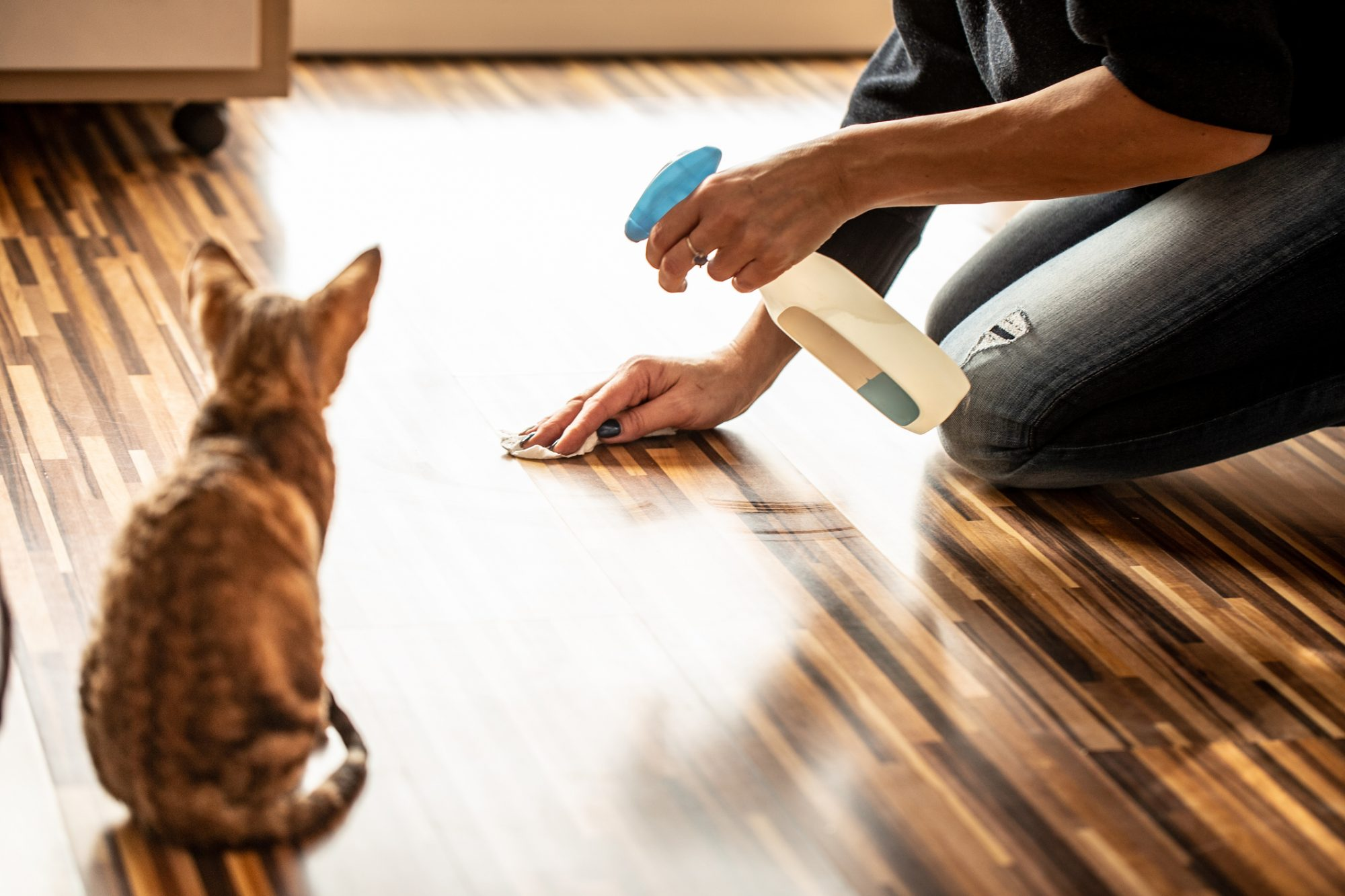 Cat owner cleaning floor as cat watches.
