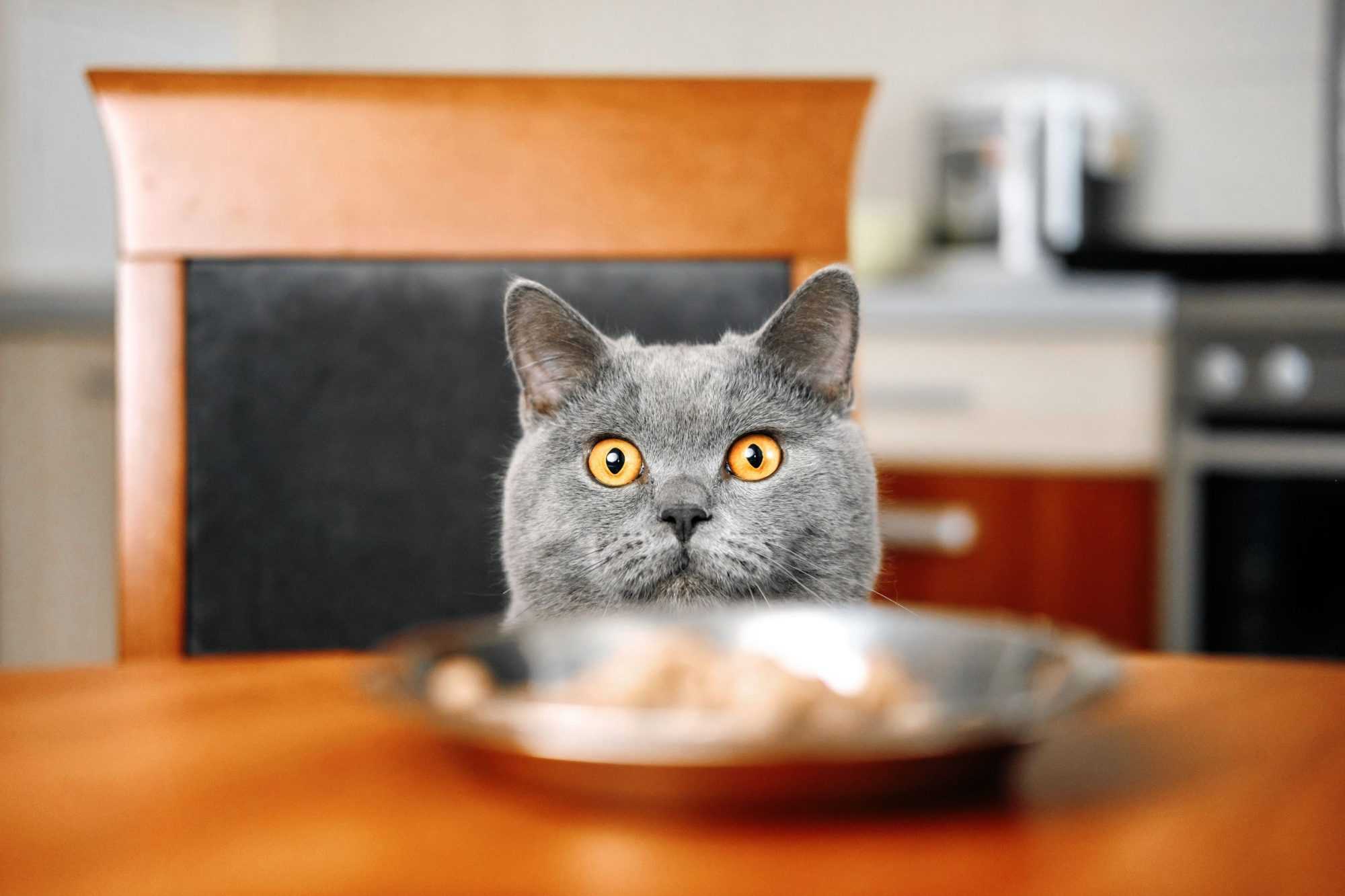 Cat looking at plate of foot on table.